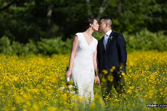 Bride and groom in a field of buttercups at the Rocks Estate in Bethlehem NH